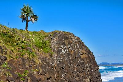 Lone tree on Fingal Head.