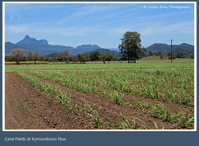 View of Mount Warning (Wollumbin) from Kynnumboon, near Murwillumbah, New South Wales, Australia. Photographed at midday on a hot December day.  Photographed December 2012 - © 2012 Lesley Bray Photography - All Rights Reserved.