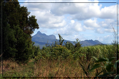 Looking at Mount Warning (Wollumbin) from the canefields at Kynnumboon, New South Wales, Austalia.  Photographed April 2007 - © 2007 Lesley Bray Photography - All Rights Reserved.