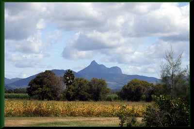 Another view of  Mount Warning (Wollumbin) overlooking Kynnumboon, nestled in the Tweed Valley, near Murwillumbah, Nsw.  Photographed April 2007 - © 2007 Lesley Bray Photography - All Rights Reserved.