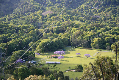 A view from the Queensland side of the range down into the Currumbin Valley - jacaranda trees out in full bloom - more power lines.