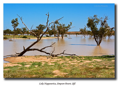 Lovely view of Lake Nappanerica as we headed around the southern end detour towards the QAA line in the Simpson Desert.  Photographed August 2010