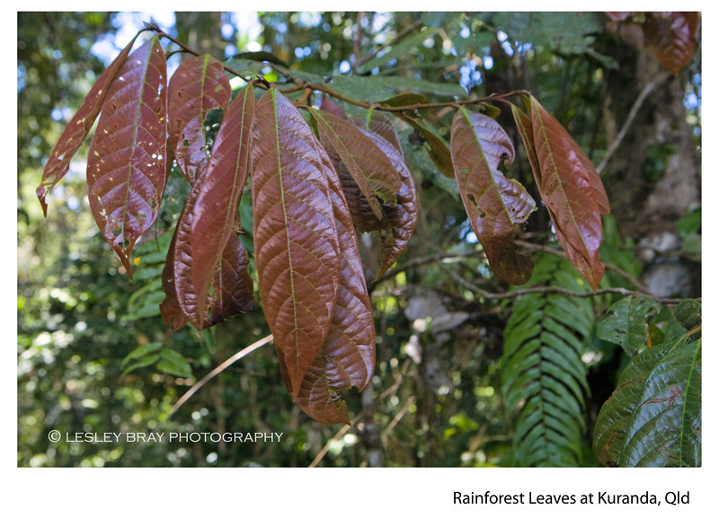 Leaves of the Forest