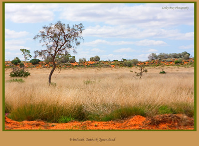 Love the different colours and textures of the outback.  Grass leading to the dunes outside Windorah on the Diamantina Developmental Road in outback Queensland, Australia.  Photographed August 2010 - © 2010 Lesley Bray Photography