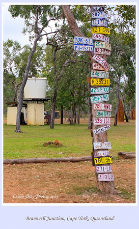 Number Plate Tree at Bramwell Junction, Cape York Peninsular, Queensland, Australia.  Guess it means that the road is so bad at times, number plates tend to fall off.  Photographed June 2010 - © Lesley Bray Photography