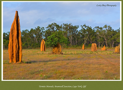 Termite Mounds at Bramwell Junction, Cape York Peninsular, Queensland, Australia.   Photographed June 2010 - © Lesley Bray Photography