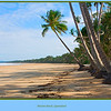 Mission Beach, Queensland, Australia. <br /> <br /> Photographed July 2010 - © Lesley Bray Photography