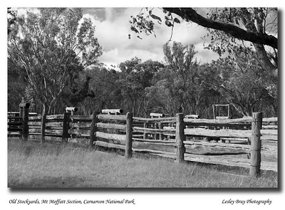 The old stockyards near Long Gully were built in 1902.  April 2010