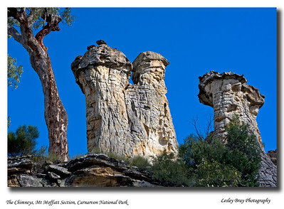 The Chimneys at Mt Moffatt in Carnarvon National Park are hardened sandstone caps - look remarkably like giant phalluses to me !  These chimneys sit high up on a rugged mountain top.  April 2010.