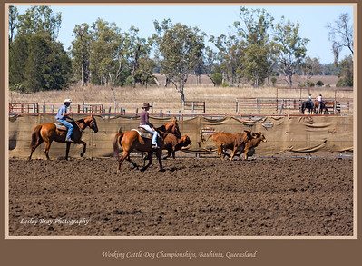 A bit of action with horses rounding up the cattle at the Working Cattle Dog Championships at Bauhinia on the Dawson Highway, Queensland, Australia.  Photographed August 2010 - © Lesley Bray Photography