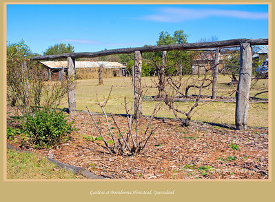 We visited Boondooma Homestead on the Mundubbera Durong Road, Boondooma, Queensland, Australia.  The old homestead was an interesting insight into a pioneers life, unfortunately the gardens are now in need of some tender loving care.   Photographed August 2010 - © Lesley Bray Photography
