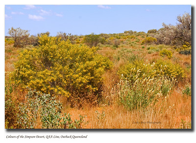 Colours of the Simpson Desert National Park, after rain the desert is prolific with wildflowers.  QAA Line, Outback Queensland. The size of this file has been reduced for uploading, therefore degrading the quality a little.  Photographed September 2010