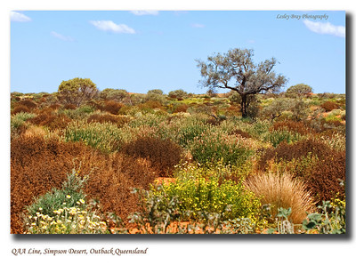 I love the colours and textures of the Simpson Desert.  This was taken along the QAA Line, in the Simpson Desert National Park, outback Queensland.  Photographed September 2010