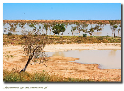 Another view of Lake Nappanerica with Nappanerica Dune in the background. The Simpson Desert is a landform which contains the world's longest parallel sand dunes.  These north-south oriented dunes are static, held in position by vegetation. They vary in height from 3 metres in the west to around 30 metres on the eastern side.  The largest and most famous dune, Nappanerica, or more popularly Big Red is 40 metres in height.  Photographed August 2010