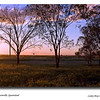 Our first sunset, we camped at a little place called Bowenville, on the eastern side of Dalby out on the Warrego Highway.<br /> <br /> Photographed April 2010