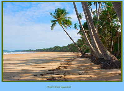 Mission Beach, Queensland, Australia.   Photographed July 2010 - © Lesley Bray Photography