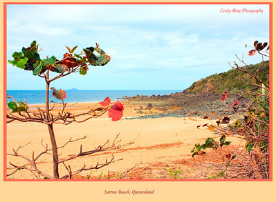 Sarina Beach at Sarina, Queensland, Australia  Photographed August 2010 - © Lesley Bray Photography