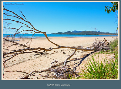 Seaforth Beach, Queensland, Australia  Photographed August 2010 - © Lesley Bray Photography