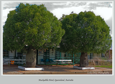 There isn't much at Muckadilla but there is a pub obsured by bottle trees.  Outside are two bench seats aptly named the Seat of Knowledge and Bench of Bullshit.  Muckadilla is on the Warrego Highway, south western Queensland, Australia.  Photographed September 2010 - © Lesley Bray Photography.