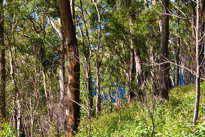 The bushland in Elimbah Chair area.