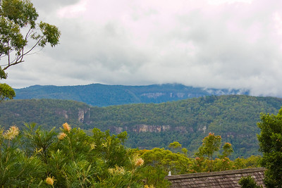 """The same view as the last photo - next morning - looking out over Lamington National Park from our cabin at Binna Burra. Binna Burra is the phrase in the local Aboriginal language meaning """"where the beeches grow"""". Flowers in the foreground are Grevilleas - native to Australia."""