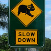 Friday 29 February 2008 - Road sign in our area - I think it says it all.<br /> We did have large tracts of koala habitat in the Redlands area, unfortunately the population explosion in South-east Queensland means these little guys have fewer trees in which to live.