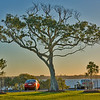 Tuesday 19 Aug 2008 - Tree at Cleveland Point at sunset.
