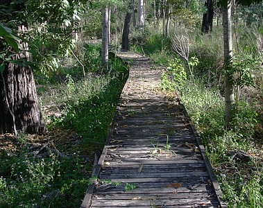 Another area of boardwalk - unfortunately no water lying beneath in dry times - will be interesting to return in another season and take photos.