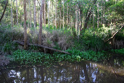 Platypus Pool - unfortunately we didn't spot the platypus but we heard him splashing as we walked up to the pool.