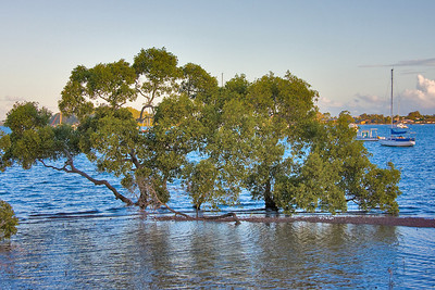 Monday 13 May 2008 - Mangroves at Point O'Halloran late in the afternoon - nice to see the water in and the boats floating.