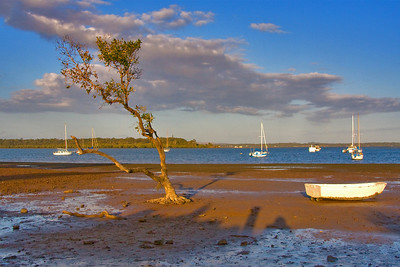 Thursday - 3 Jul 2008 - Lonely tree at Point O'Halloran - sorry if you guys are sick of boats but it's where I spend most of my time when I'm not working.   I've been battling a bad bout of the flu since last Friday.  Feeling a lot better today and since I didn't go to work was able to get down to the waterfront a little earlier - therefore I had more light to play with (my last 2 DP's were taken in very low light).