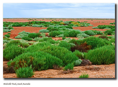 Green vegetation in Sturt Stony Desert after the  rain in 2010, as seen from the Birdsville Track in South Australia.  Photo taken in September 2010.