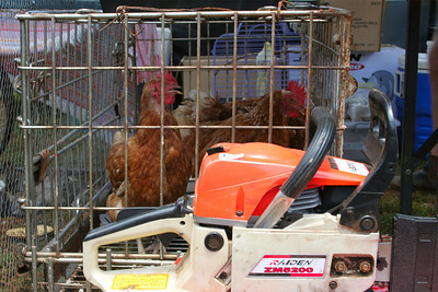 Chooks and chainsaws for sale - Tamborine Mountain State School Markets