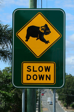 Friday 29 February 2008 - Road sign in our area - I think it says it all. We did have large tracts of koala habitat in the Redlands area, unfortunately the population explosion in South-east Queensland means these little guys have fewer trees in which to live.