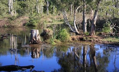 Black Swamp Wetlands at Cleveland.