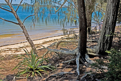 This is the spot where Matthew Flinders landed on Norfolk Beach, Coochiemudlo Island.  It is aptly named Flinders' Landing. Flinders named the island 'Sixth Island', but it had been known for generations as 'Kuychi Mudlo' - the place where they obtained the red ochre stones used as body decoration.  November 2008