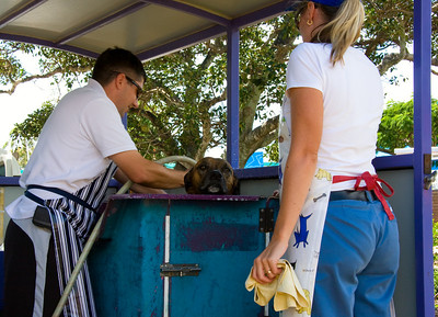 Dog wash at the Manly Creative Markets - I was a bit worried about the dog, that guy has a butchers apron on !!!!