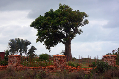 Boab Trees are protected trees. This one is at the cottage belonging to the lighthouse keeper.  The stone fence is made from rocks taken from the cliffs.