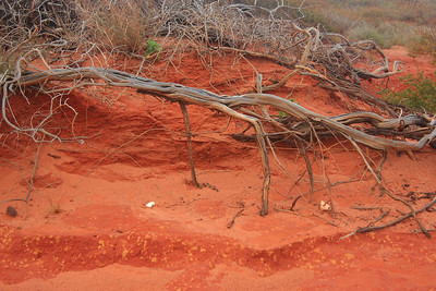 The soil is a rich red all around the point.