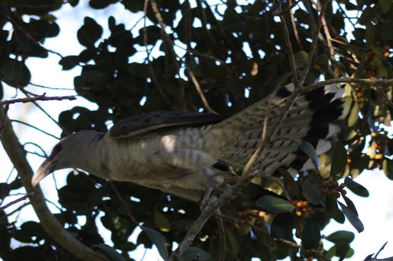 Sherwood Forest Park, Brisbane, 2008