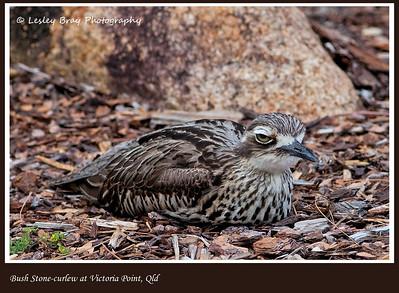 Parent on Nest
