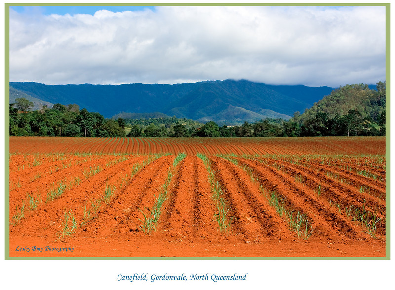 Cane field, ploughed and planted at Gordonvale, North Queensland, Australia. <br /> <br /> Photographed July 2010 - © Lesley Bray Photography