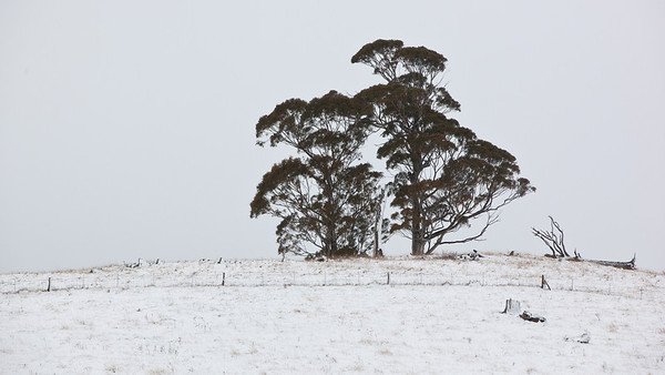 Oberon Snow
