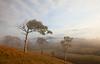 Hunter Valley Dawn
