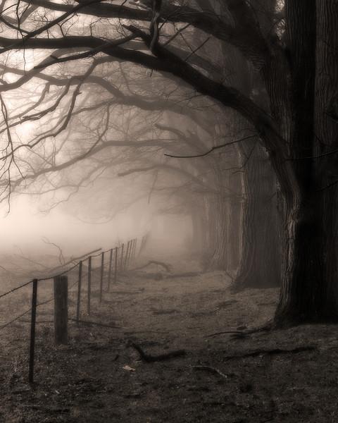 Under the Elms