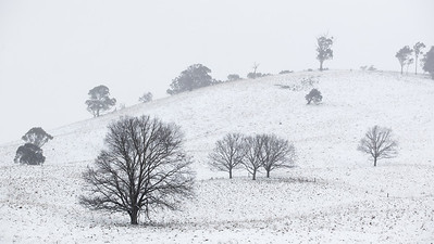 Heavy snowfall at Oberon in the Central Tablelands of New South Wales, Australia.