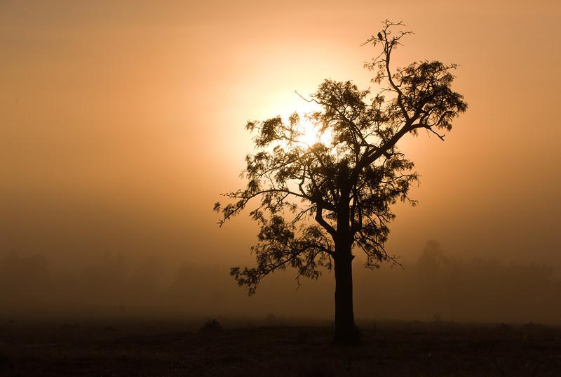 South Ripley Sunrise