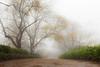 Toowoomba Driveway