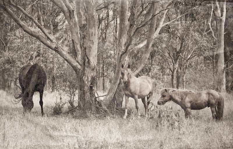 Emu Creek Horses