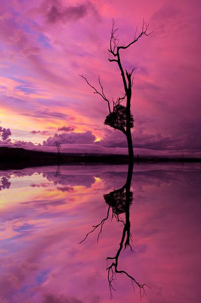Pink at Lake Moogerah